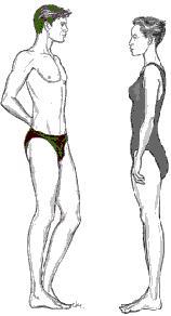 body shape short legs long torso