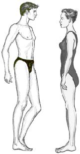 body shape long legs short torso
